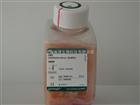 10099-141优级胎牛血清 FBS